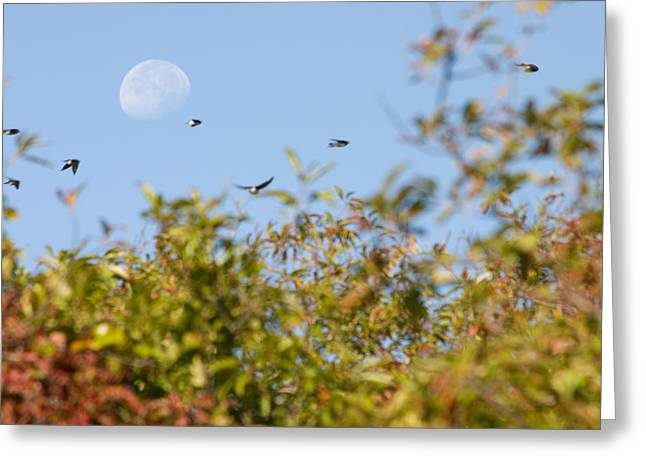 Moon Over The Dunes Greeting Card