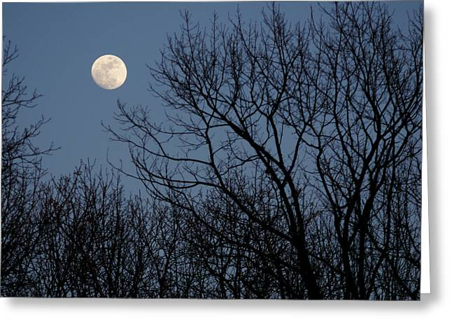 Moon Over Trees Greeting Card