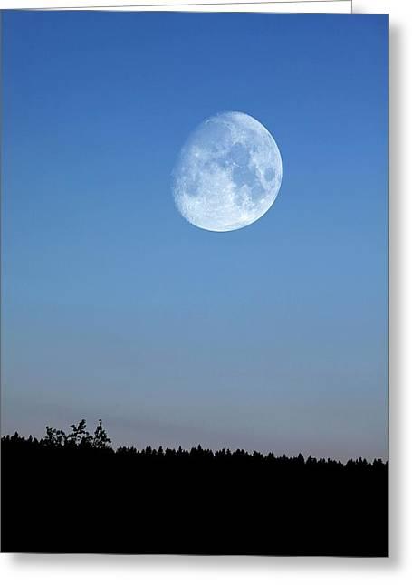 Moon Rising Over Trees Greeting Card by Detlev Van Ravenswaay