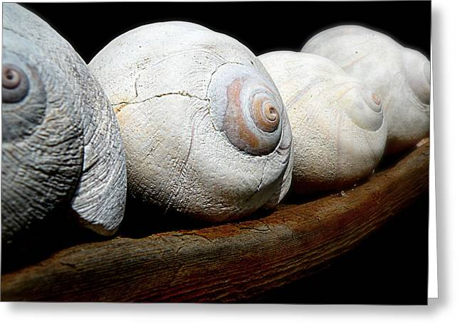 Greeting Card featuring the photograph Moon Shells by Micki Findlay