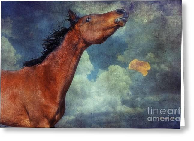 Moon Song Greeting Card by Karen Slagle