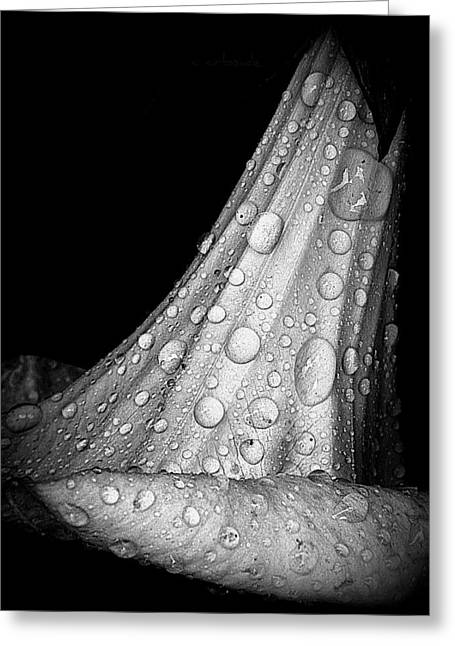 Moonflower And Rainwater  Greeting Card by Chris Berry