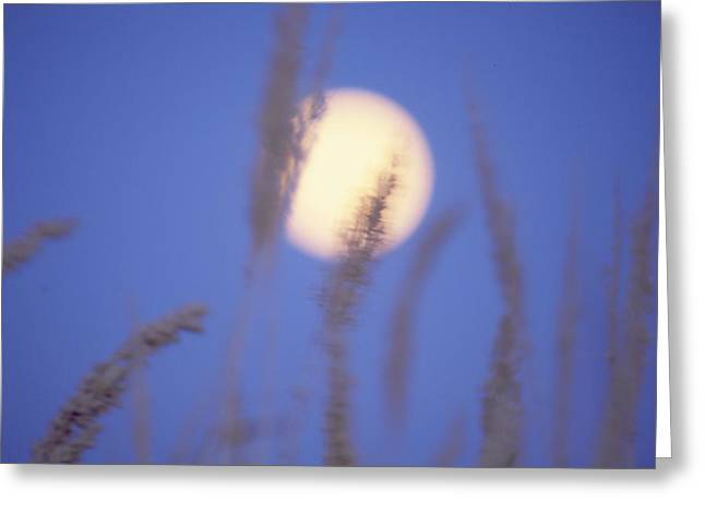 Moongrass Greeting Card