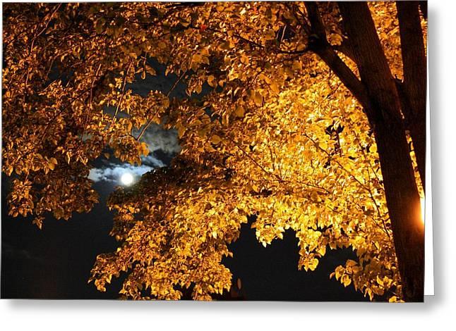 Moonlight Greeting Card by Dan Stone