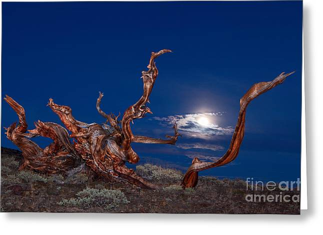 Moonlight Dance - Light Painting Night View Of The Ancient Bristlecone Pine Forest Tree. Greeting Card