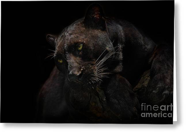 Moonlight Musings Greeting Card by Ashley Vincent