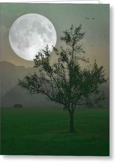 Moonlight On The Plains Greeting Card by Tom York Images