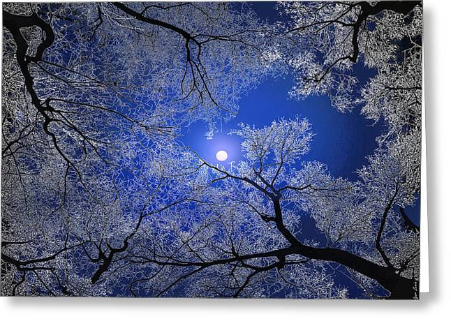 Moonlight Trees Greeting Card by Igor Zenin