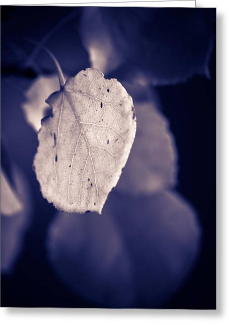 Moonlit Aspen Leaf Greeting Card by Dave Garner