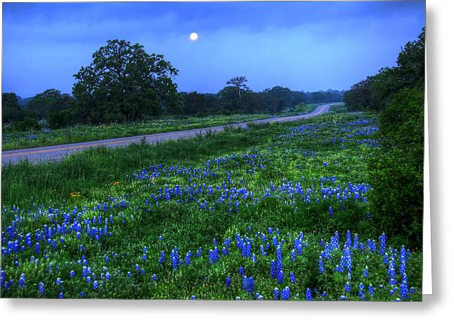 Moonlit Bluebonnets Greeting Card