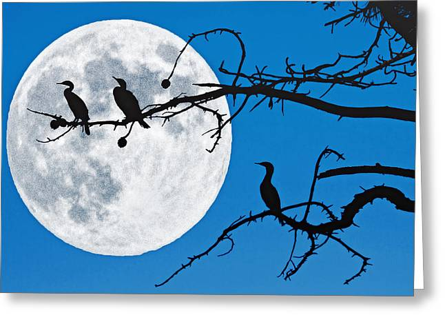 Moonlit Cormorants Greeting Card by Donna Pagakis
