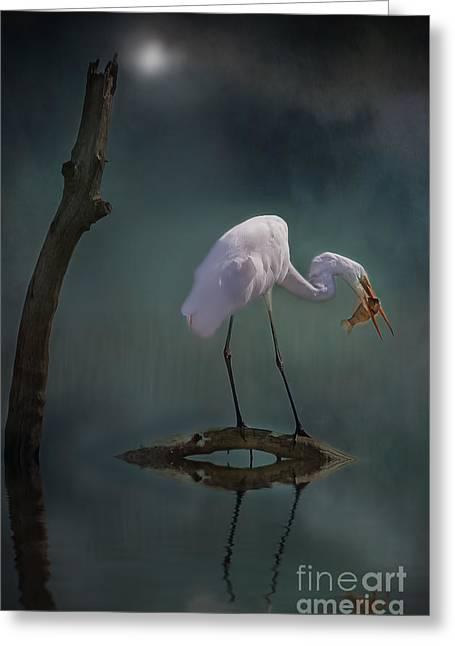 Moonlit Egret Greeting Card by Kym Clarke