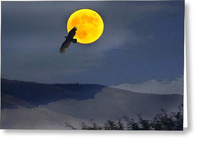 Moonlit Freedom Of Flight Greeting Card
