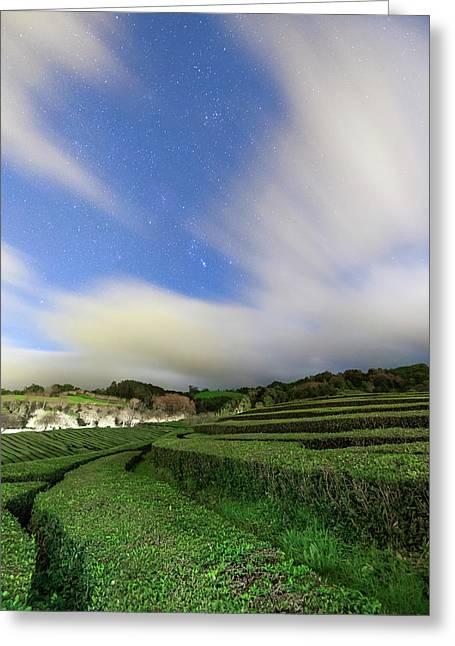 Moonlit Tea Plantation Greeting Card by Babak Tafreshi