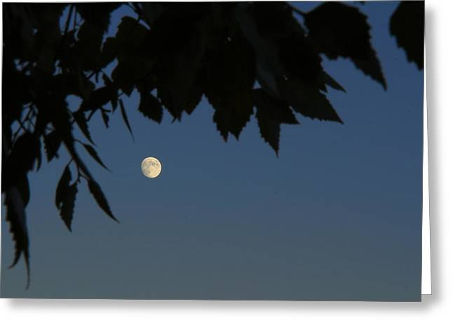 Moonrise Greeting Card by Andrea Kappler