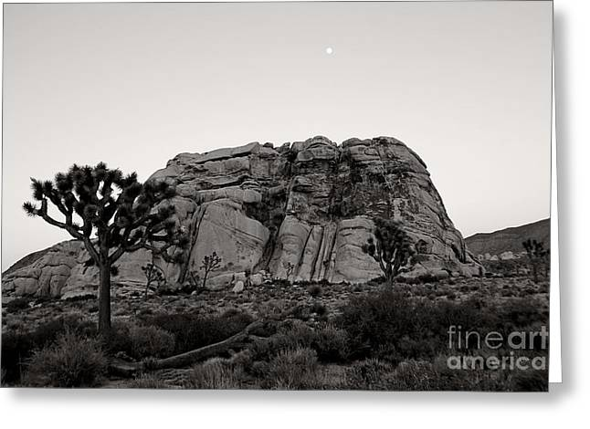 Moonrise In Joshua Tree Greeting Card by Kent La Gree