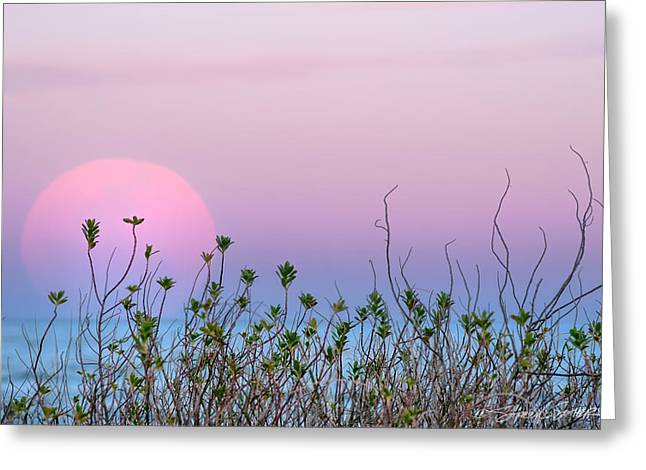 Moonrise Over Dunes Greeting Card
