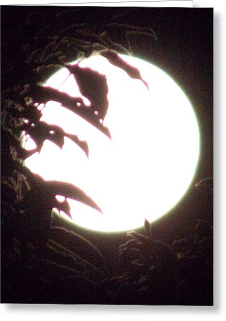 Moonshine 11 Evsion Pt2 Greeting Card