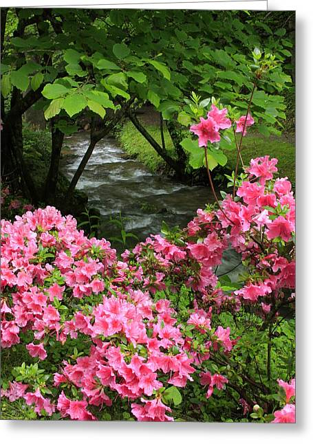 Moonshine Creek Rhododendron Bloom - North Carolina Greeting Card by Mountains to the Sea Photo