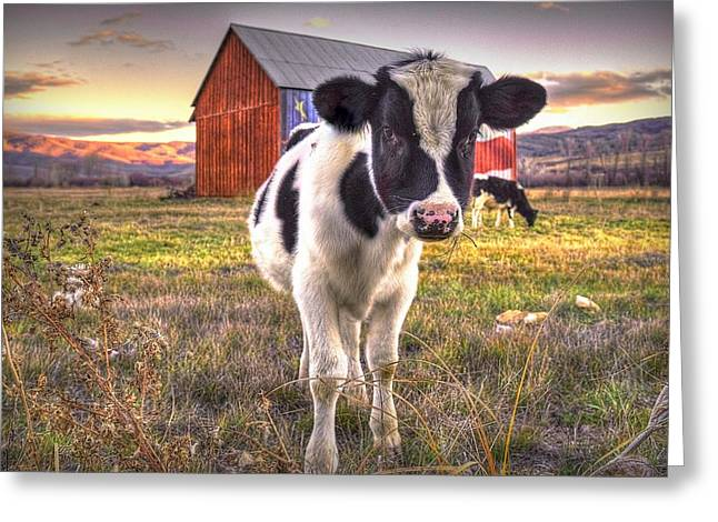 Mooove It  Greeting Card
