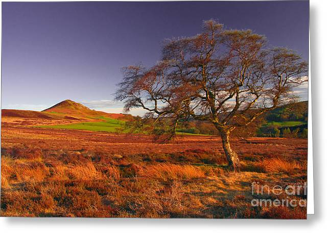 Moorland Tree North Yorkshire Greeting Card