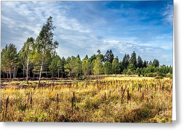 Wetlands In The Black Forest Greeting Card