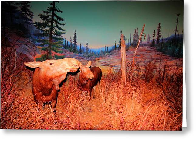 Greeting Card featuring the photograph Moose ..algonkian by Larry Trupp