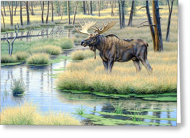 Moose Country Greeting Card