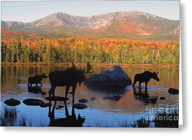 Moose Family Scenic Greeting Card by Jane Axman