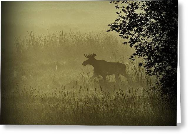 Moose In The Mist Greeting Card by Annie Pflueger