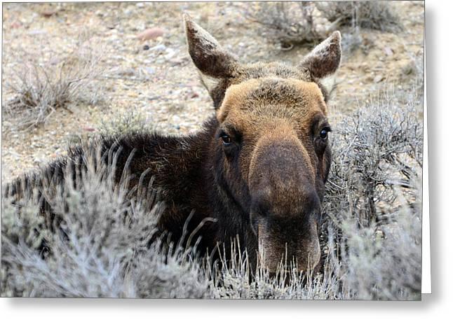 Moose Mugshot Greeting Card