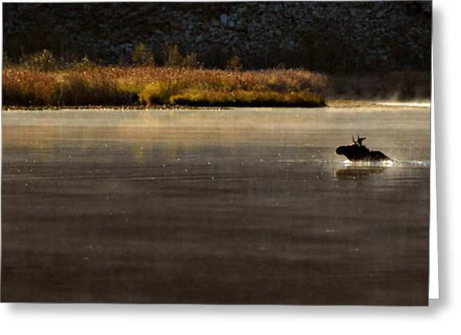 Moose On Blue Lake Greeting Card