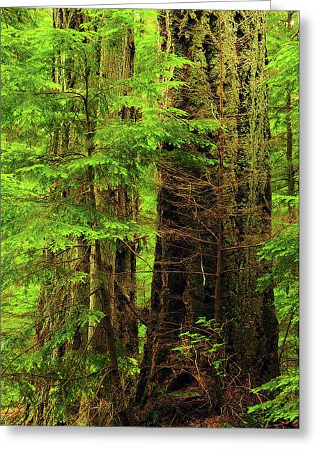 Moran State Park, Washington, Usa Greeting Card