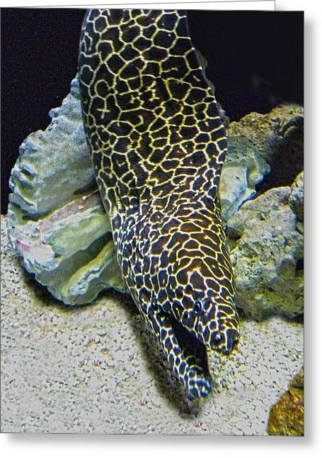 Moray Eel Greeting Card by Sandi OReilly