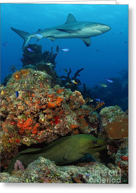 Moray Reef Greeting Card