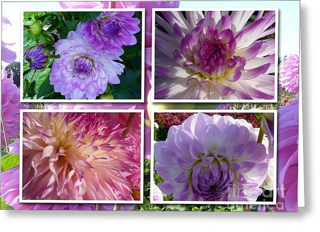More Dahlias Greeting Card by Susan Garren