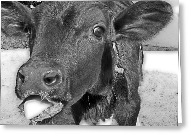 More Milk Please Greeting Card by Victoria Sheldon