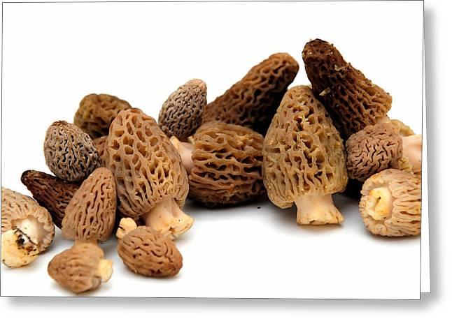 Morel Mushroom Greeting Card by Don Bendickson