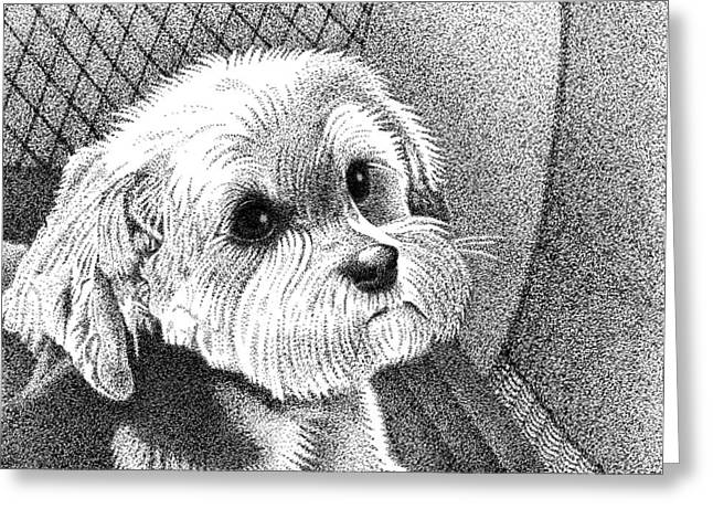 Morkie Greeting Card by Dustin Miller