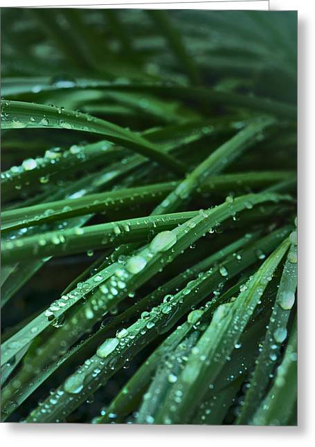 Morning After The Rain Greeting Card by Cindy Rubin