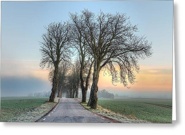 Morning Allee Greeting Card by EXparte SE