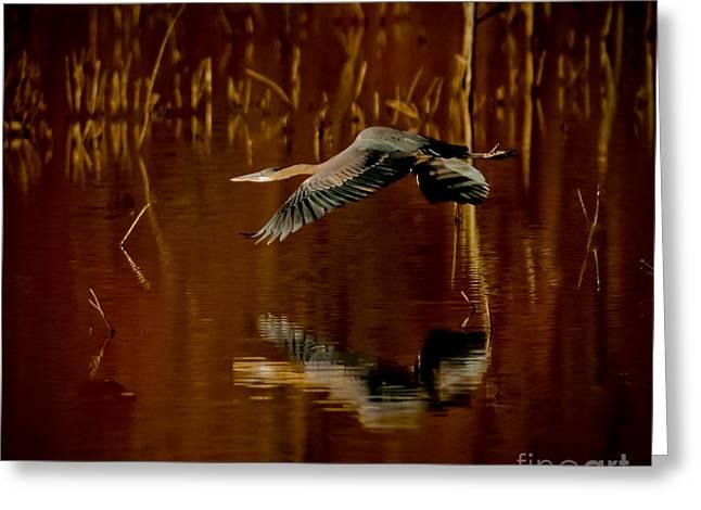 Heron Flying Through Rusty Bog Greeting Card