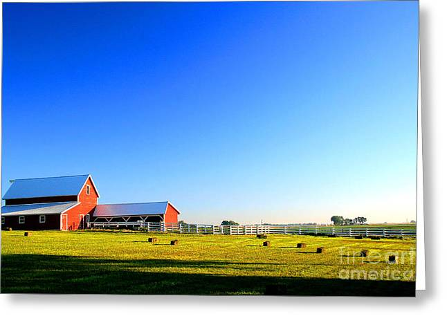 Morning At The Farm Greeting Card by Steven Reed