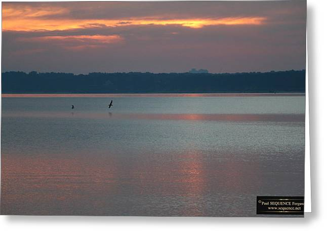 Morning Beauty 1 Greeting Card by Paul SEQUENCE Ferguson             sequence dot net