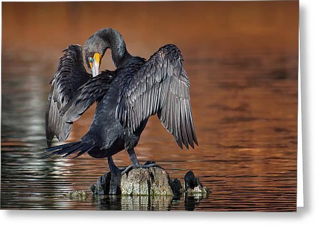 Morning Cormorant Greeting Card by David Bond