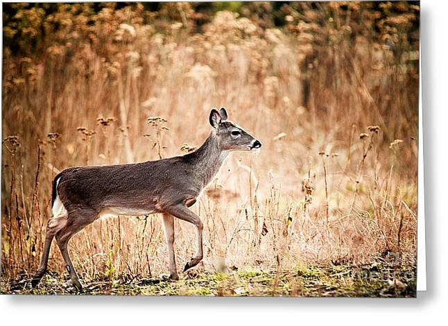 Morning Deer Greeting Card by Katya Horner
