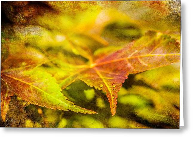 Water Droplets - Macro - Morning Dew Greeting Card