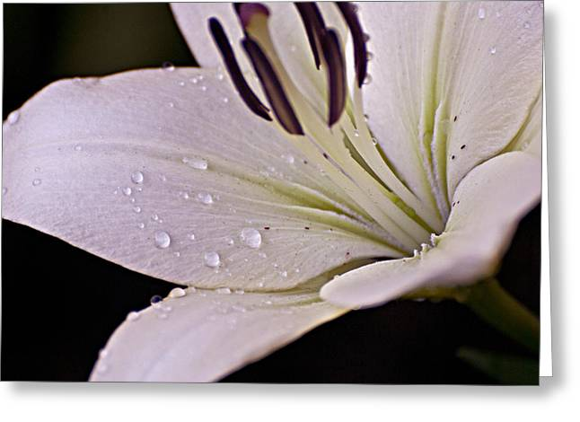Morning Dew Greeting Card by Christopher Gaston