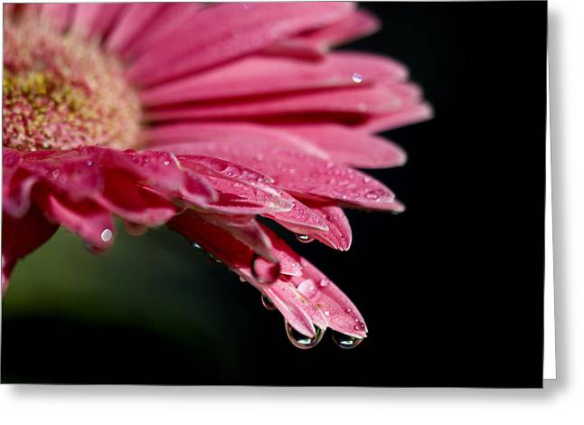 Greeting Card featuring the photograph Morning Dew by Joe Schofield
