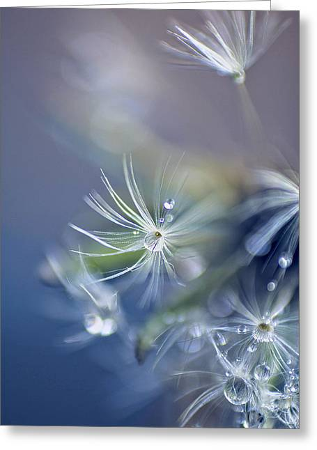 Morning Dew Greeting Card